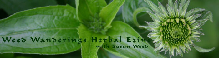 An Herbalist's Notebook: Another Healing Story from an