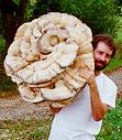 the edible wild mushroom by the mushroom man alan muskat